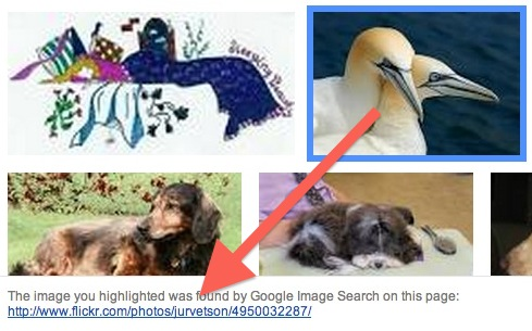The google icon is for 2 birds, but the link leads to a photo of wolves!