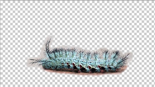 caterpiller alone