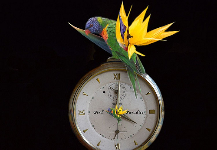A New ds106 Daily Create Tweet Clock