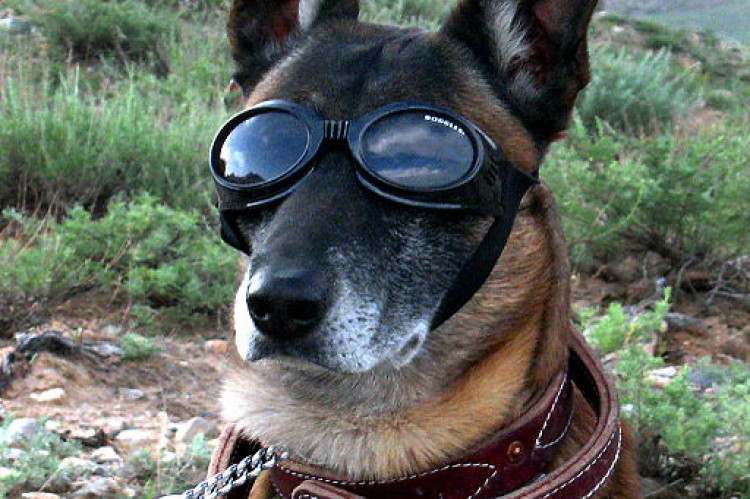 Strap on Your Doggles. The YouShow Engine is Revving Up.