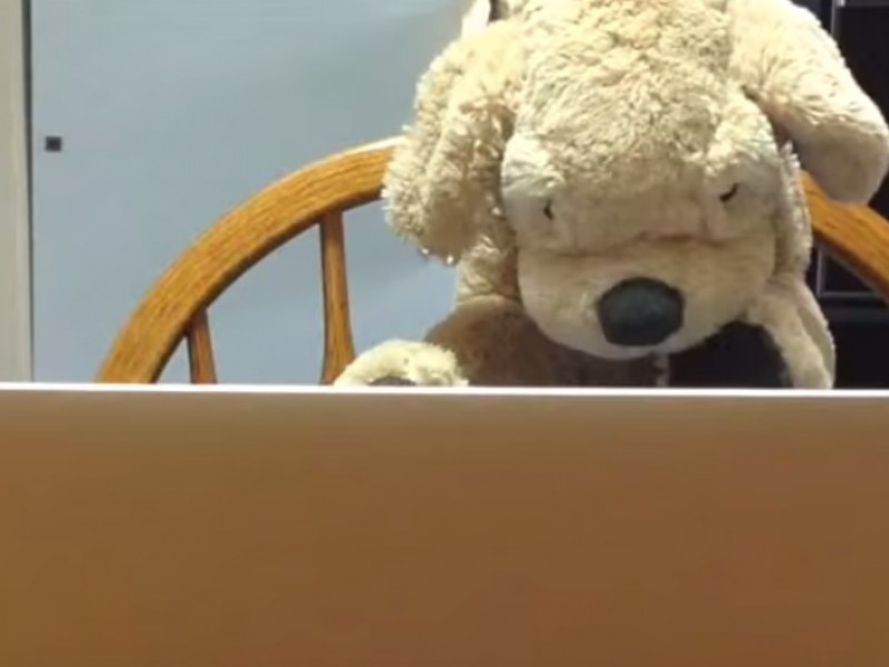 It Takes A Stuffed Animal To Explain the Call for Stories