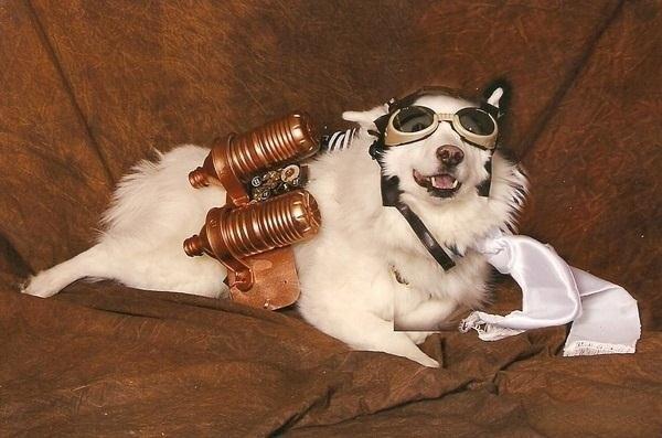 steampunkdog
