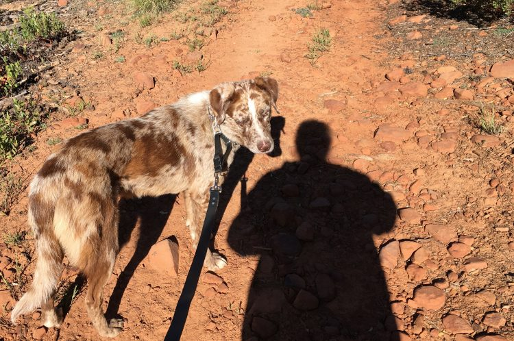 On Dog Walking