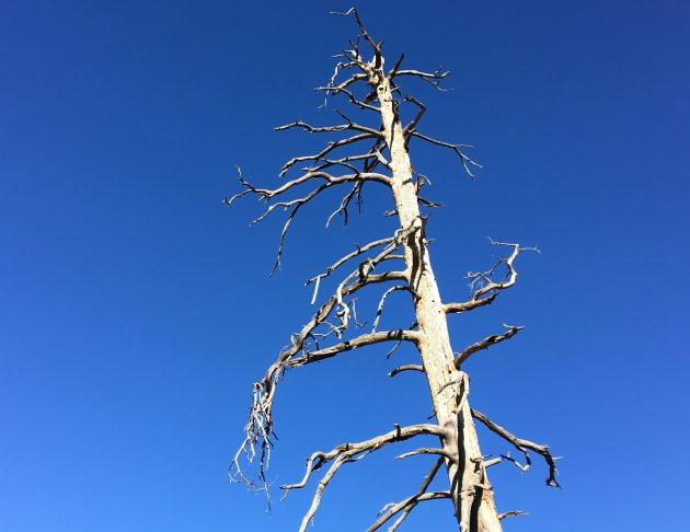 Just a dead tree leaning? Majestic