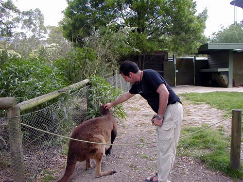 Proof of being in Australia! Petting a kangaroo at Healesville Sanctuary in Victoria