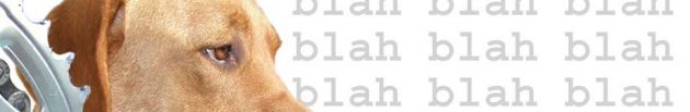 blog-header-welite