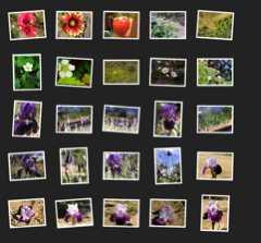 Flickr-Postcard1