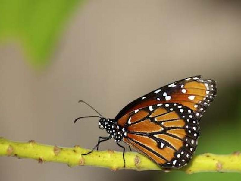 Happy Butterflyday