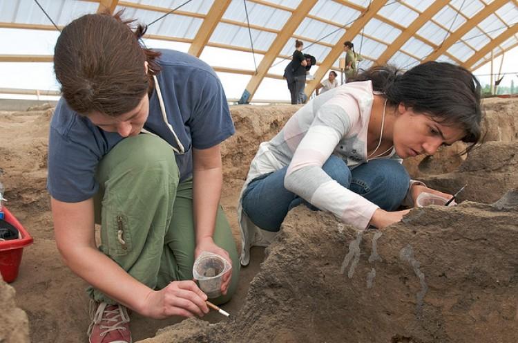 Dinosaur Eggs and Web Paleontology