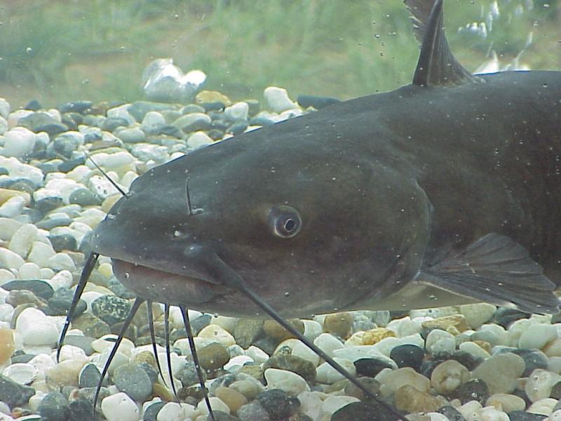 Inside the World of Catfishing