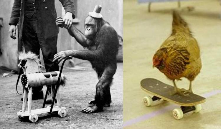 """Seeking  Web Tricks Better Than """"Chicken on a Skateboard"""""""