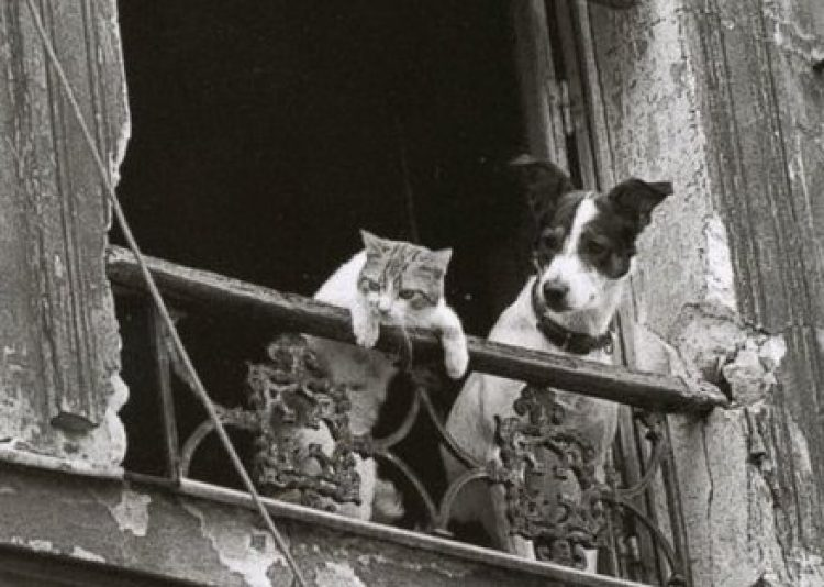 Dog and Cat Look in Vain for Their Attribution
