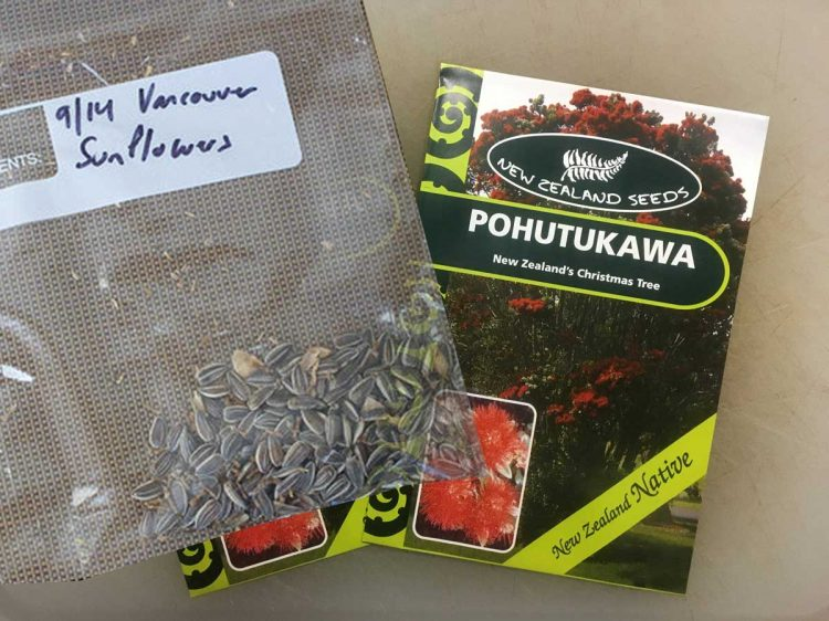 Sharing Seeds: Sunflowers Out / Pohutukawa In