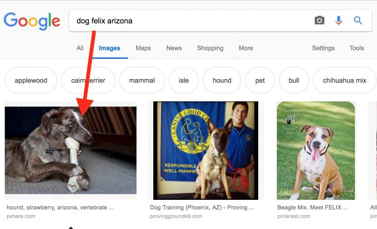 """image search on """"felix dog arizona"""" with arrow pointing to image of Felix with a bone."""