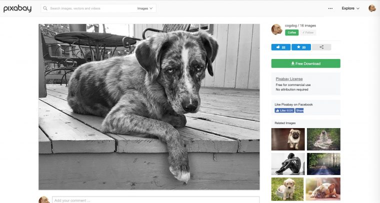 the original photo of felix published to pixabay, almost the same page as Maxpixel, except here credit is given