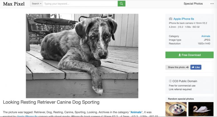 Photo of  my dog Felix on the Max Pixel site, with all of the info about the photo lifted from pixabay, except attribution
